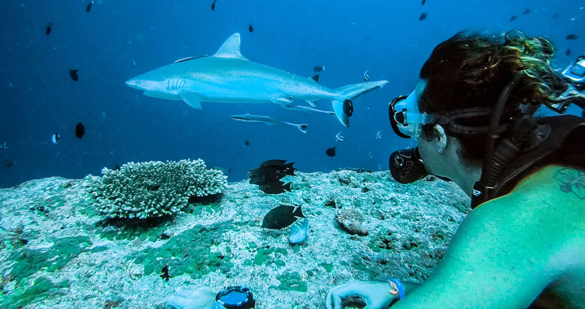 stabiele kwaliteit stopcontact officiële foto's Scuba Diving The Maldives At Cinnamon Ellaidhoo | Stoked For ...