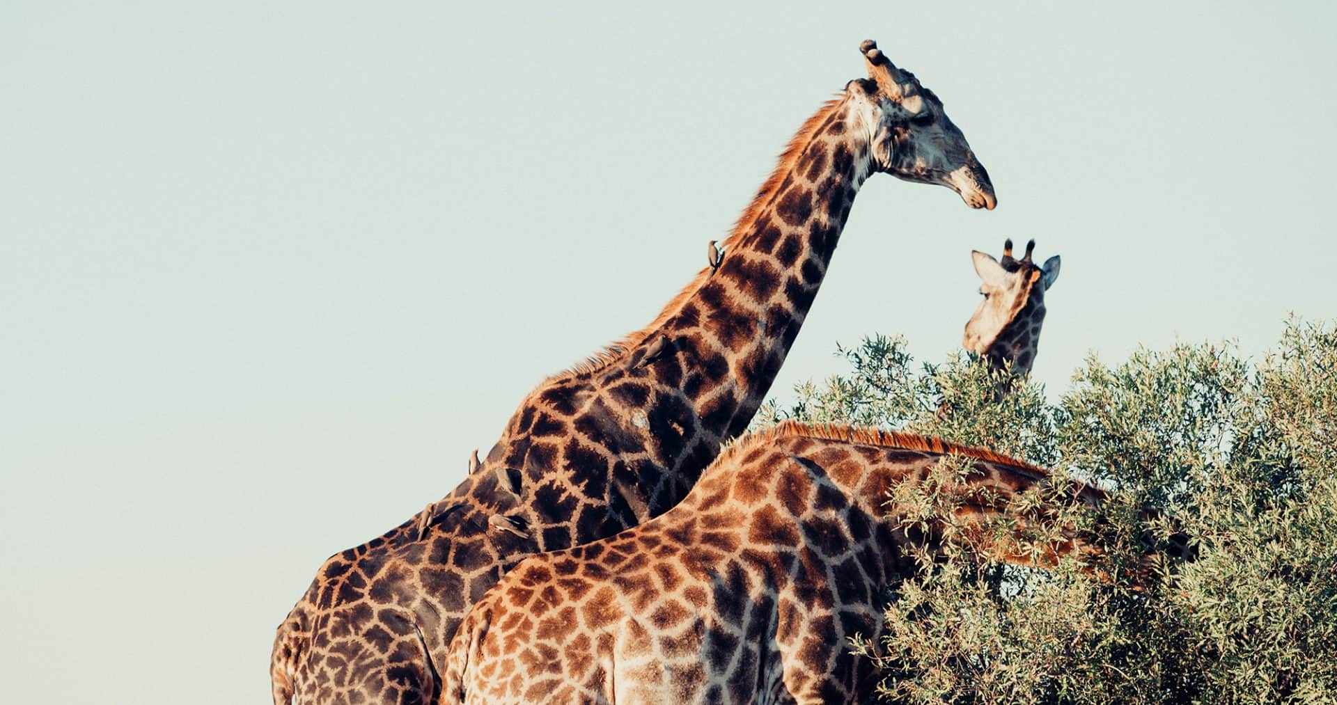 top things to do in south africa stoked for travel best things bucket list