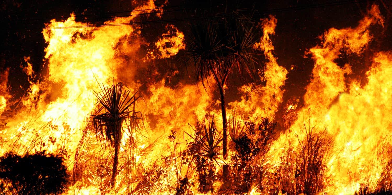australia bushfire help donate link redcross wildlife
