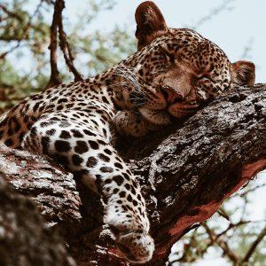 Sri Lanka 2 Week Itinerary yala national park leopard elephant