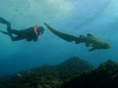 scuba diving byron bay julian rocks dive site byron bay dive centre